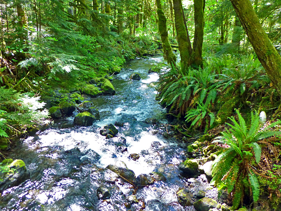The West Elwha Trail crosses Hughes Creek - an impressive Elwha River tributary
